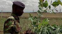 Soldier from Embakasi Garrison planting a tree, 2005